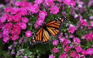 borboleta_em_campo_de_flores-wide